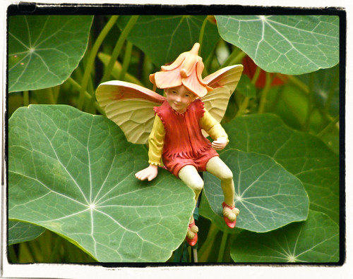 The Nasturtium Fairy