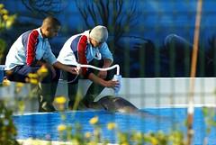 Il est faux de croire que les delphinariums sont des jardins zoologiques visant essentiellement l'éducation, la conservation de l'espèce et la recherche (CaptiveDolphins-vs-WildDolphins) Tags: malta dolphins shame delphinarium malte mediteraneo maltagozo marinelands mediterraneomarinepark captivedolphins themediteranneomarineparkinmaltaisashame unehonte unaverguenza dauphinscaptifs themediteranneomarineparkinsliemathemediteranneomarineparkinmalta themediteranneomarinepark dauphinsdelfines delfinescautivos