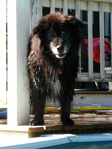8589 Kizzy after a dip