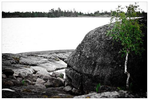 Stones life