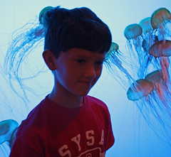 Ross in front of jellyfish tank