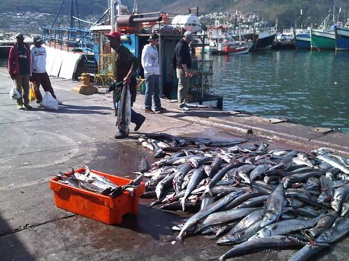 Snoek Fishing