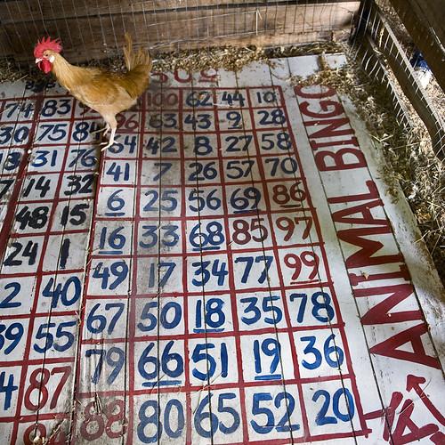 Rooster Bingo