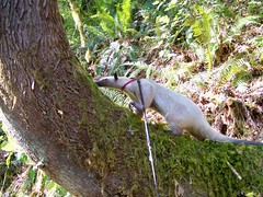 Pua investigates a tree
