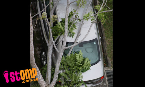 Uprooted tree falls and damages cars at Tampines St 21 carpark