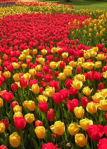 Visit: Longwood Gardens blog image 4