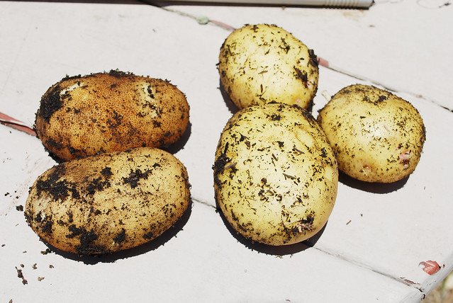 0609potatoes
