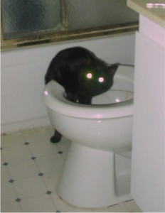 naughty_kitty