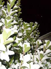 snowy tree (dandavie) Tags: winter snow cold tree nature leaves night dark