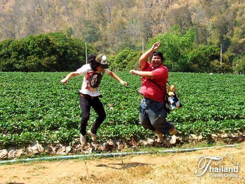 Thailand Travel - Chiang Mai Strawberry Festival (12) by som-is-orange.