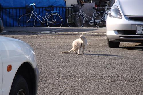 Today's Cat@20090225