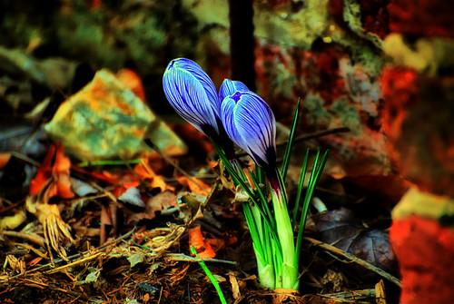 Spring celebration