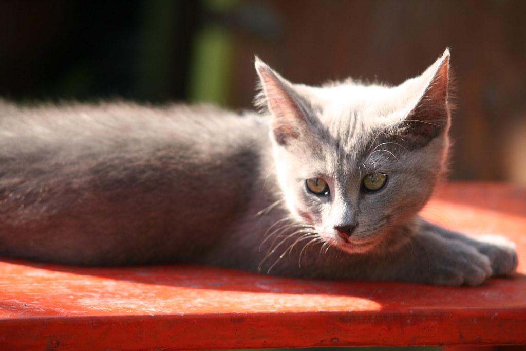 Kittens of Pegusha - Page 3 3374056734_ba558ce5df_b