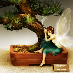 Please Do Not Touch the Bonsai (ilina s) Tags: selfportrait photoshop wings sad display cigarette crying smoking irony bonsai faerie stardust sarcasm 500x500