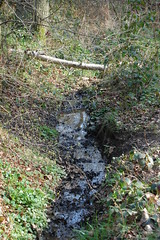 Ruislip Woods 11 (Where I am) Tags: download earlyspring sundayafternoon ruislipwoods