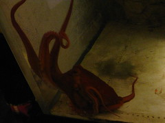 DC Zoo (Carrie Ellingson) Tags: octopus dczoo