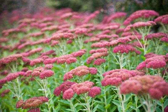 Botanic Garden Inspiration
