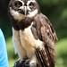 Woodland Park Zoo Seattle 072