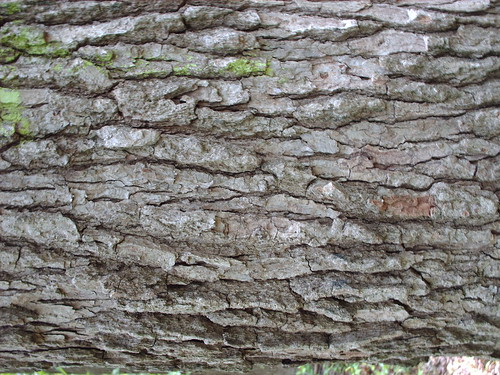 DesignM.ag Bark Texture - 7
