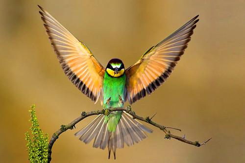3810436949 218949461d Beautiful Birds   The Splash of Colors!!!