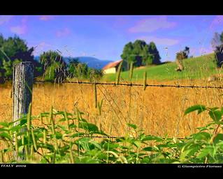 il campo d'orzo....di Tresche Conca Vicenza