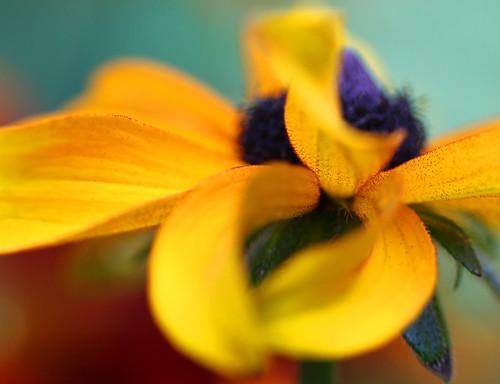 http://farm4.static.flickr.com/3473/3838606509_8e93a46de9.jpg