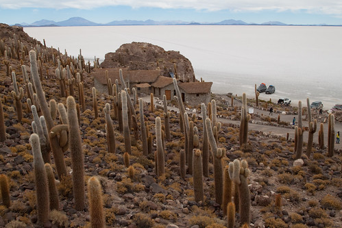 Cacti on Isla Incahuasi by jimmyharris.
