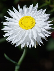 Happy flower 2 by ash-s, on Flickr