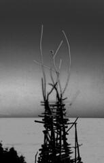 The Magic Light of Ladonia (photographer Hans Wessberg) Tags: blackandwhite nature skne sweden kullen kullaberg arx svartvitt nimis larsvilks ladonia ladonien artproject natureart