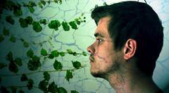 i fell vine (kyrstin) Tags: portrait male green tim grow ivy vine crack sideprofile kyrstinhealyphotography