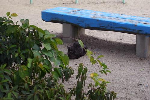 Today's Cat@20090911