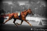 Galerie La journée du cheval à l'hippodrome de Vincennes