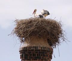High Society (terry.1953) Tags: chimney sky portugal heron nest algarve ferragudo ilustrarportugal slbnesting