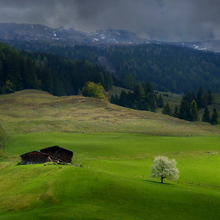 A touch of light on the green field in upper Austria