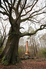 A Different View (InsideThePerimeter) Tags: tree georgia nikon ape hearth blogged rps turin d300