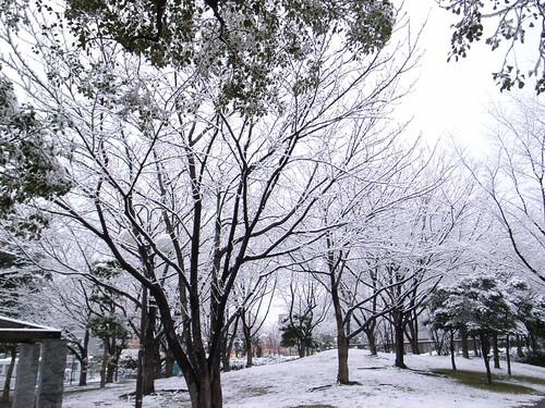 雪の駅前公園11