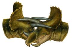 triceratops fight - Lukas Panzarin