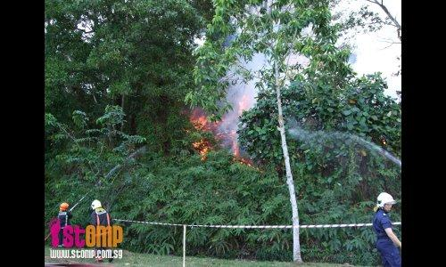 Trees on fire at Sungei Tengah