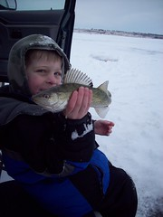 darling walleye (Paul Schumann) Tags: lake ice fishing perch darling walleye schumann