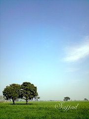 Nature, Landscape, Tree, Twin Trees (Sajjad Tufail.) Tags: blue trees two sky cloud tree green nature clouds canon landscape photo natural sony twin scene clear land scape challenge sonyphotochallenge