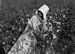 Marion Post Wolcott: Mexican woman, seasonal labor contracted for by planters, picking cotton on Knowlton Plantation, Perthshire, Mississippi Delta, Mississippi, 1939