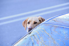 passeggero (gianluca zanaboni) Tags: abigfave veterinarifotografi