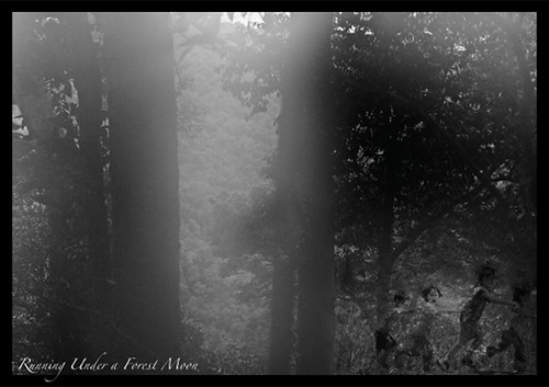 Noah_Jackson_Forest Moonlight
