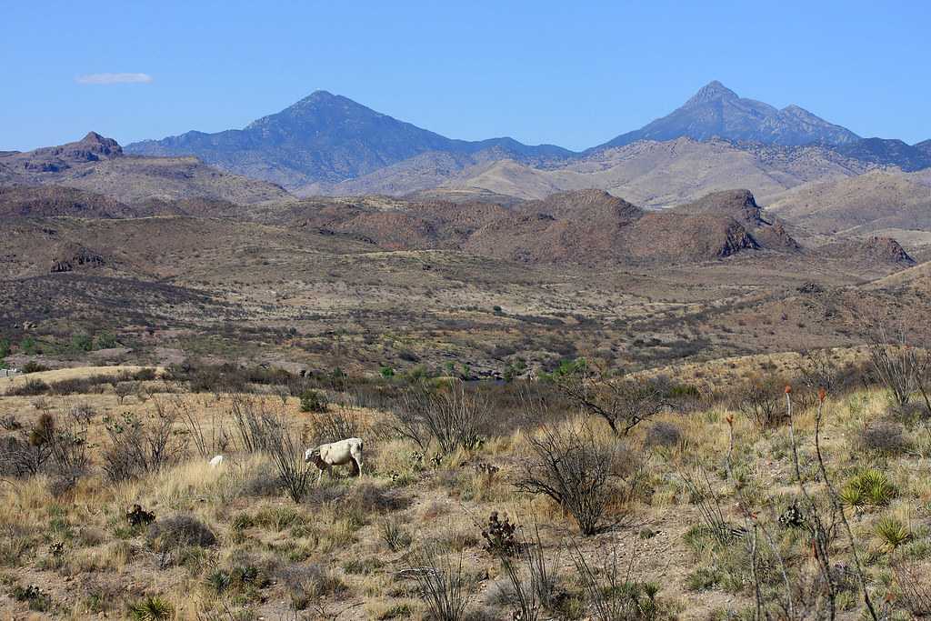 Pastoral Scene: Patagonia, Arizona