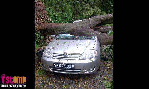Tree falls and smashes into car at Queensway