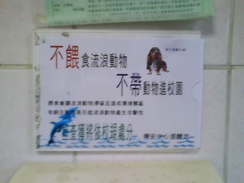 淡江大學 - 對流浪動物不友善的學校