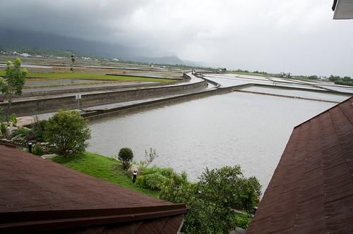 你拍攝的 day2 台東縣池上鄉 賢情玉緻。
