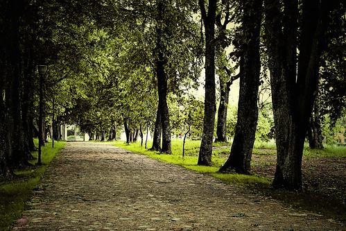 Plungės parkas - Kelias