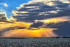 Pôr-do-Sol no Canavial (Shigow) Tags: road sunset brazil sol colors field sunshine brasil composition wow de fantastic mine do great victor pôrdosol estrada sp crop campo cana sugarcane açúcar pôr plantação shigueru ituverava shigow