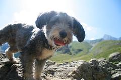Escursione col cane in montagna in Piemonte